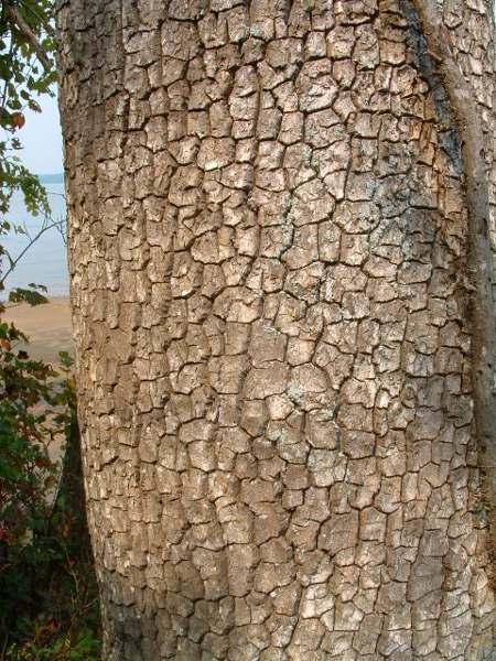 photo of a tree trunk