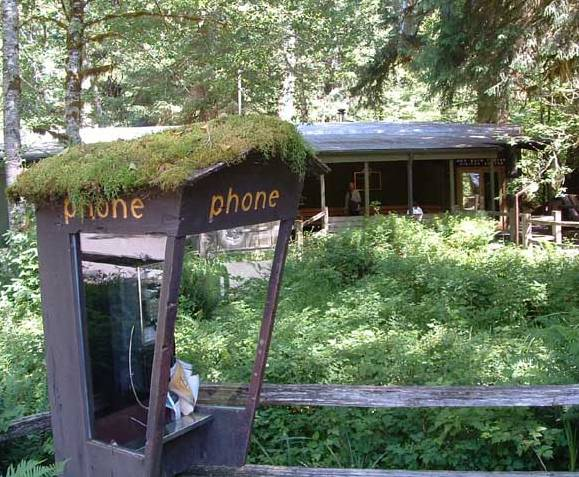 phone booth in Hoh Rain Forest