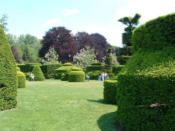 Manicured bushes at Longwood Gardens