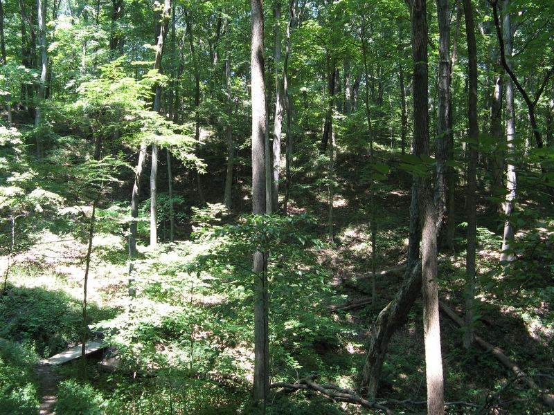 trees in Forest Glen Preserve