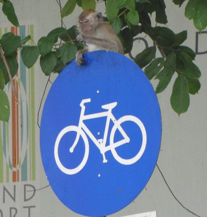 photo of a monkey sitting on a bike sign in Penang