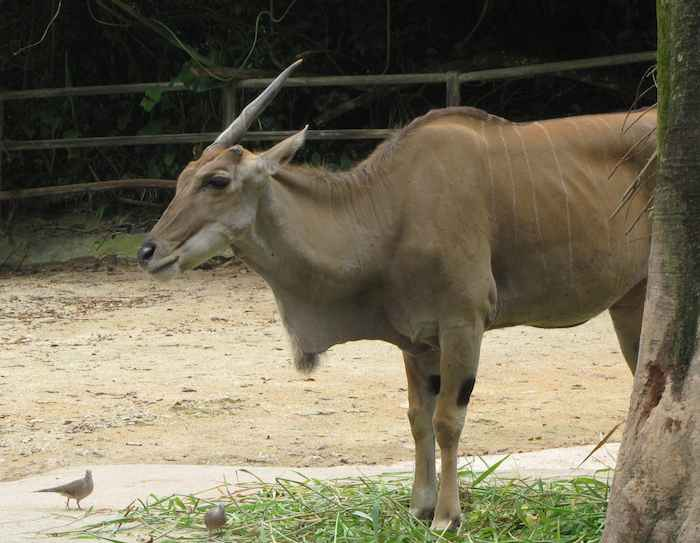 photo of a uni-horned animal