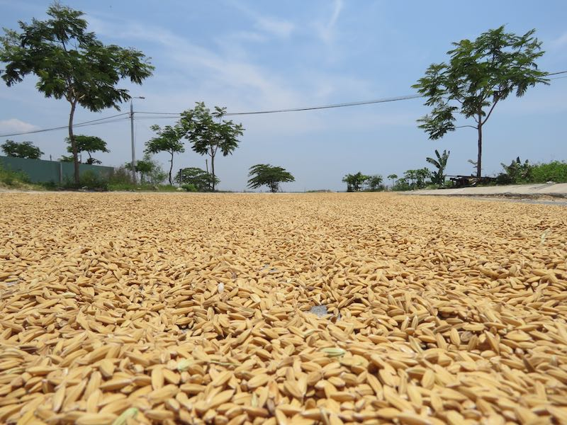 rice-drying-in-street-hoi-an-vietnam