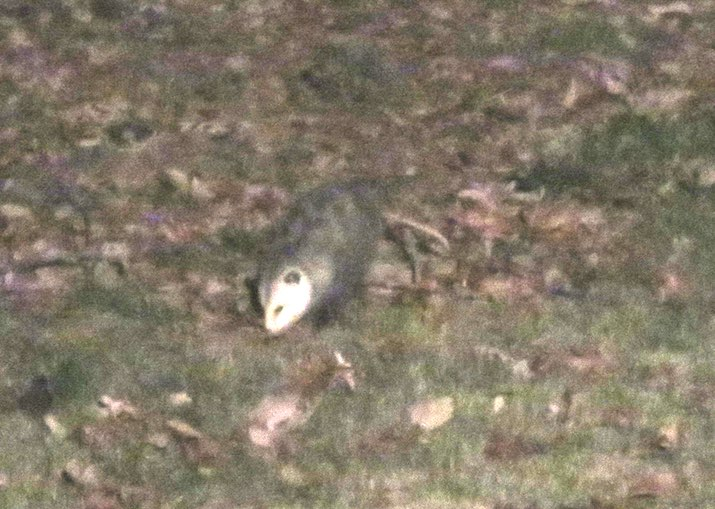 blurry photo of a possum